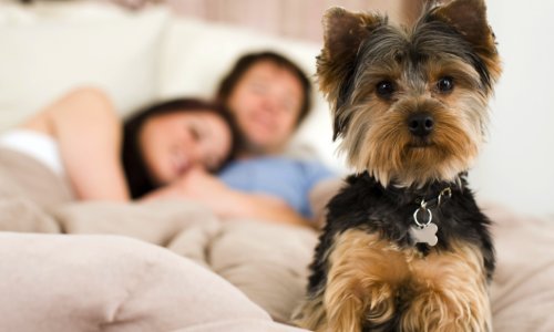 Pet Friendly Apartments For Rent In Concord, NC | Caralea Valley Apartments