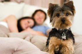 Pet Friendly Community   Apartments In Charlotte NC   Courtney Ridge
