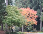 fall colors at crystal creek apartments in Vancouver, WA