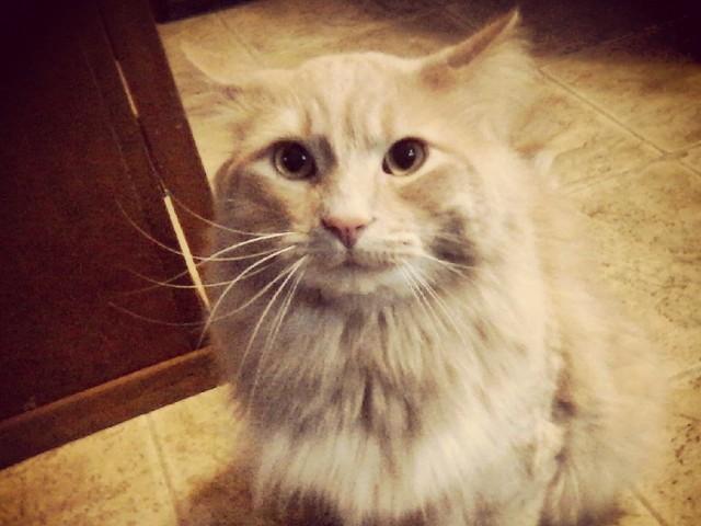 Image of Feline friendly for The Pines of Burnsville