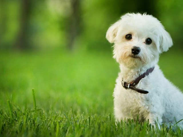 Image of Pets Allowed for Ashton Heights