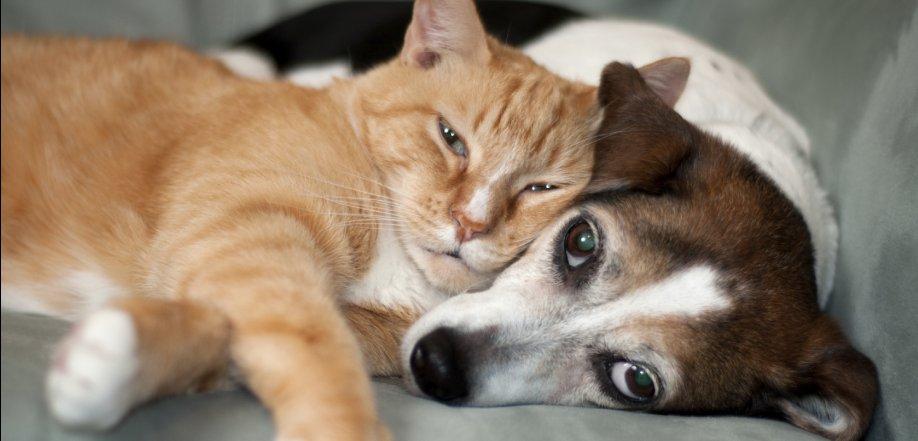 pet friendly apartment home