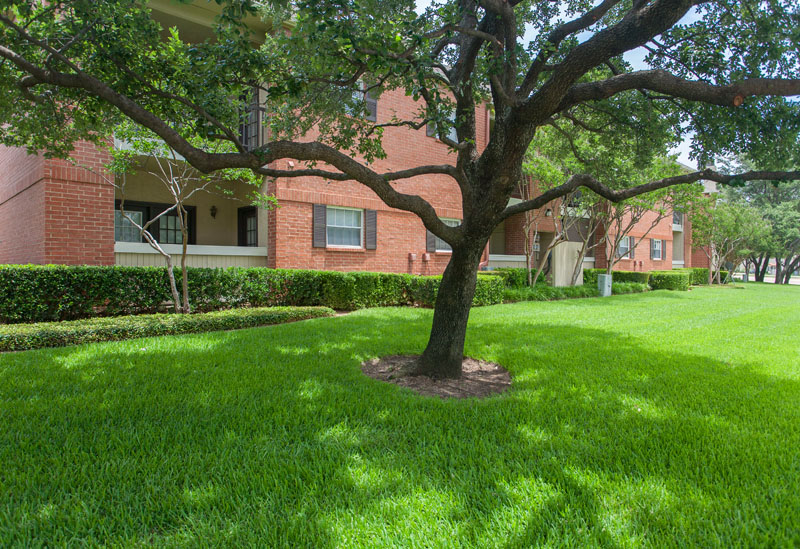 Summers Landing Apartments for Rent in Fort Worth, TX | Tree in Courtyard