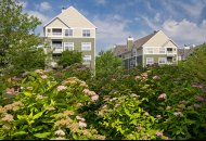 Lush landscaping at Windsor at Arbors Apartments in Alexandria VA