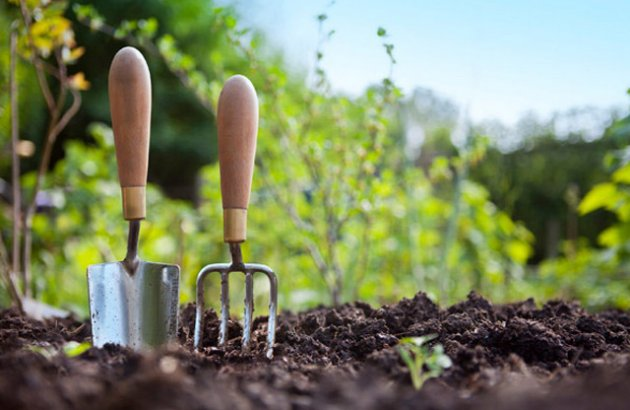 Reap the benefits of this green space by growing your own vegetables.