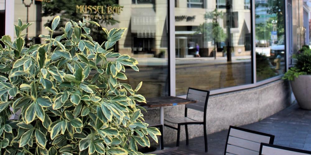 Mussel Bar | Ballston Park | Ballston Apartments