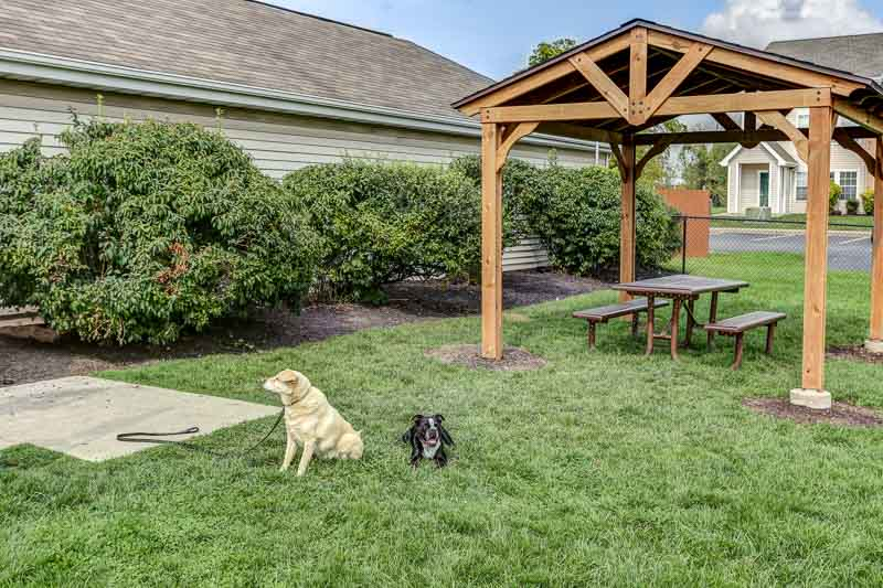 Apartments for rent in Williamsville NY | Dog Park
