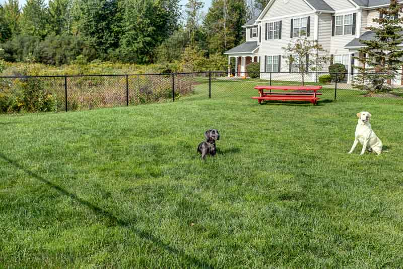 Residents and their Pets at the Bark Park | East Amherst NY Apartments | Autumn Creek Apartments