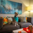 Dog in Spacious Living RoomApartment in San Antonio, TX|Laurel Canyon Apartments