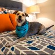 Dog in Bedroom|Apartment in San Antonio, TX|Laurel Canyon Apartments