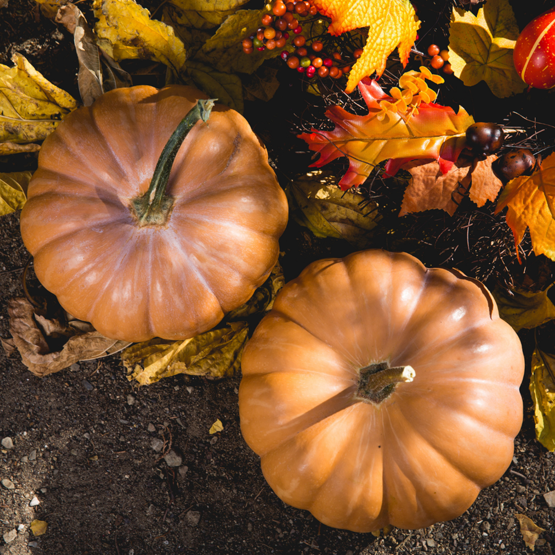 Fun October Events in Frederick, MD-image