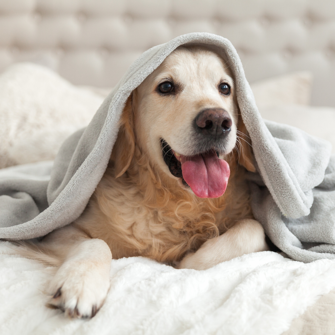 How to Find a Pet-Friendly Apartment-image