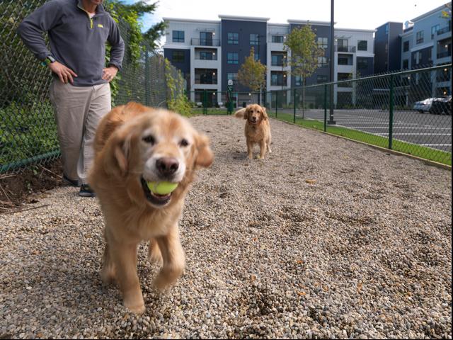 Resident Dog Run | West Roxbury Apartment Complexes | Oak Row
