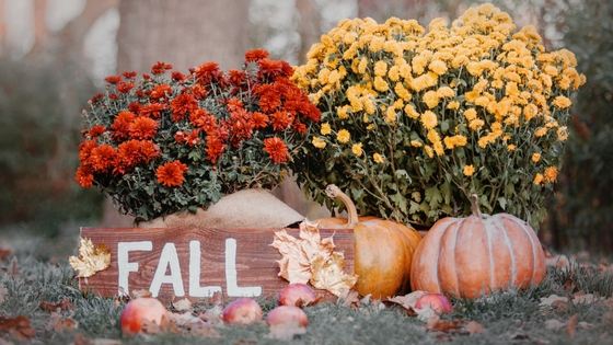 Tips for Fall decorating-image