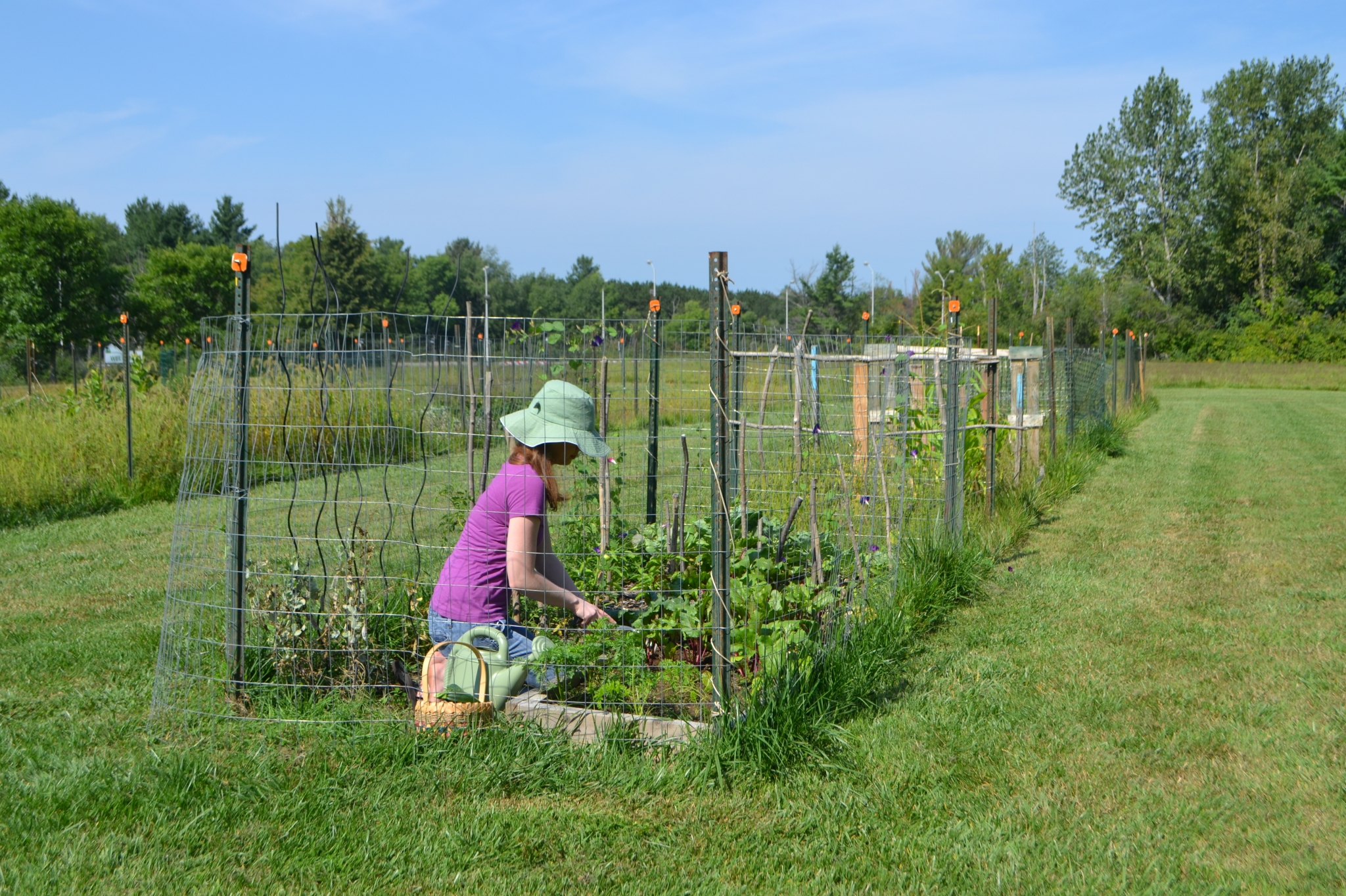 Community Garden | Housing Watertown NY
