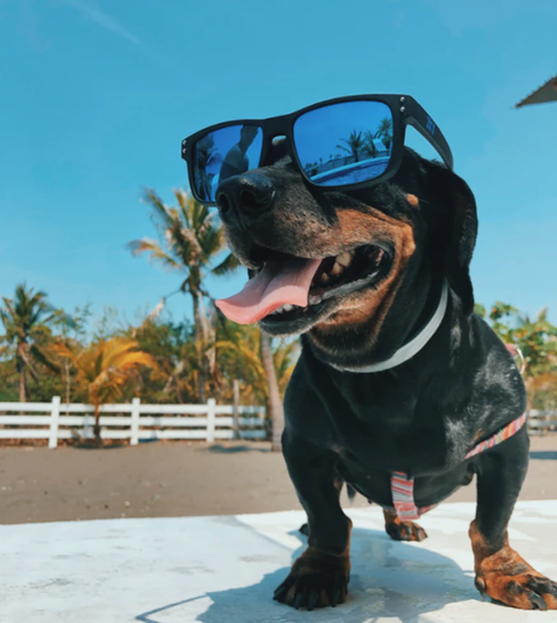 Hot Tips for Pet Parents as Arizona Temperatures Rise-image