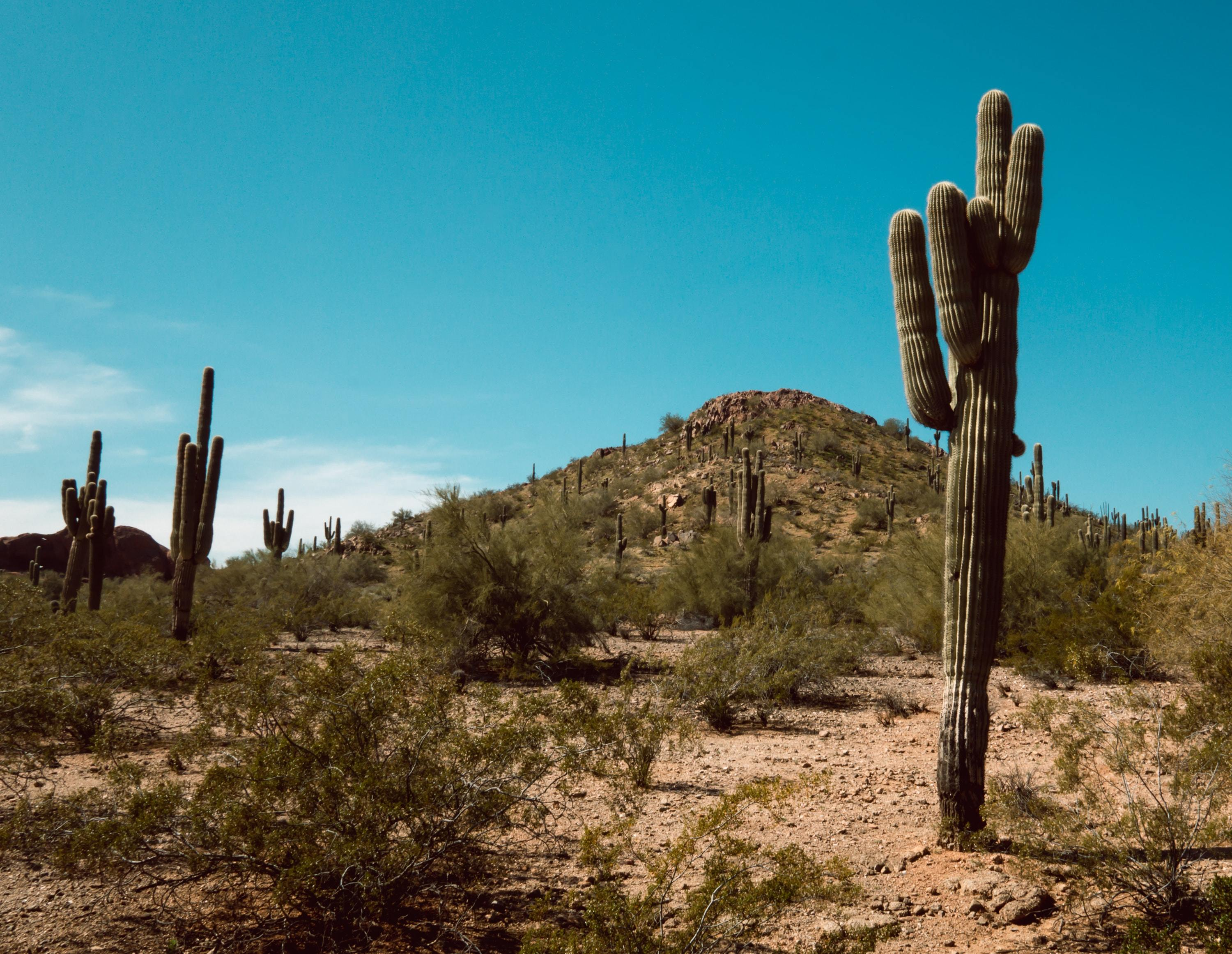 Reduce Your Screen Time and Disconnect | Parks in Gilbert, AZ-image