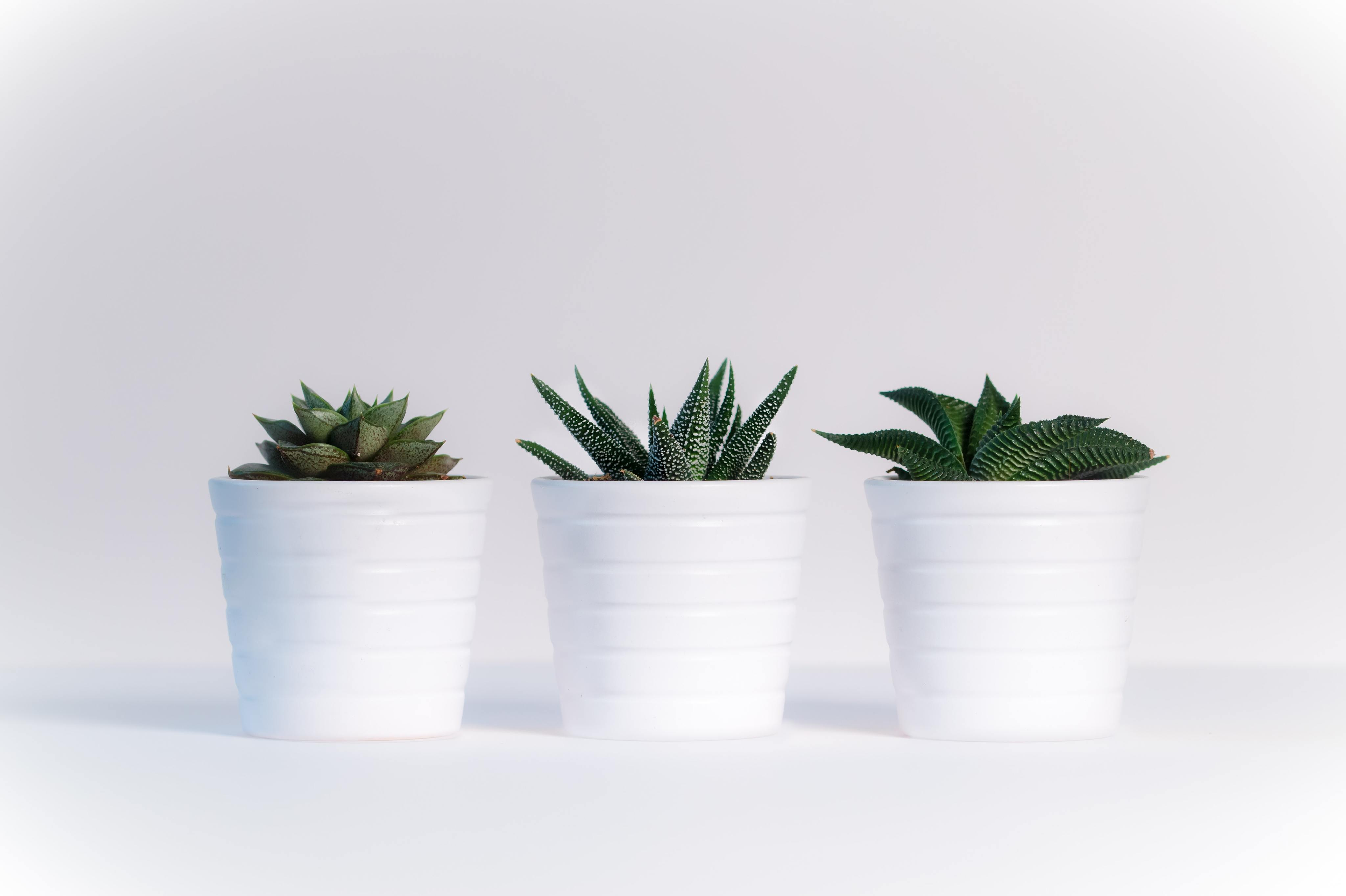 Best Houseplants and Plant Nurseries  in Vancouver, WA-image