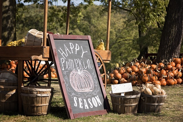 Pumpkin Patches Near Goodyear for Fall-image