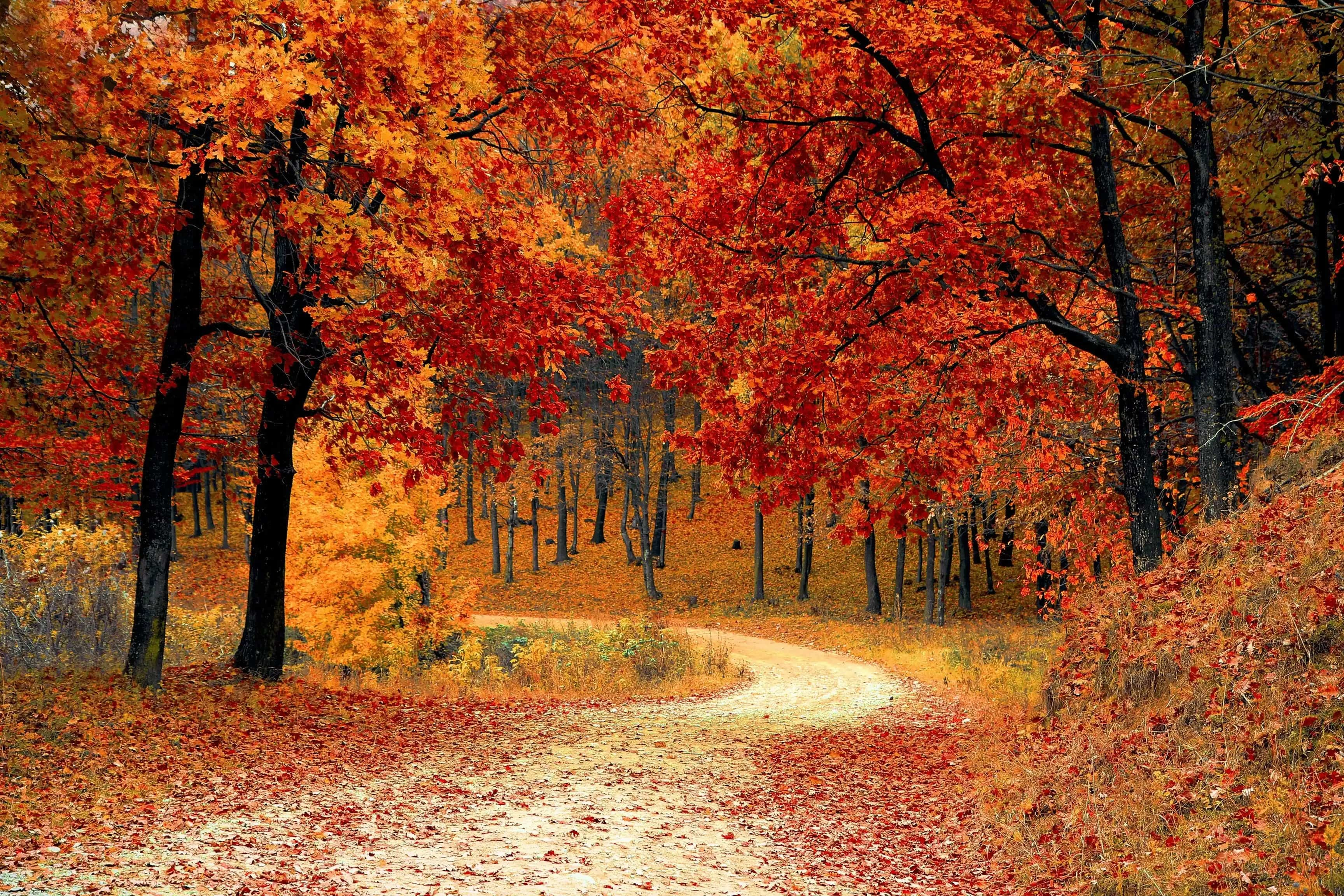 Best Places To Look At Fall Leaves in Vancouver, WA-image