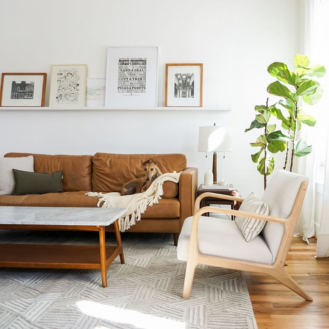 Trendy House Plants Perfect for Any Space-image
