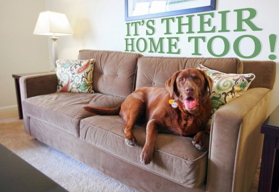 Pets are welcome in our Worcester MA apartments at Princeton Place.