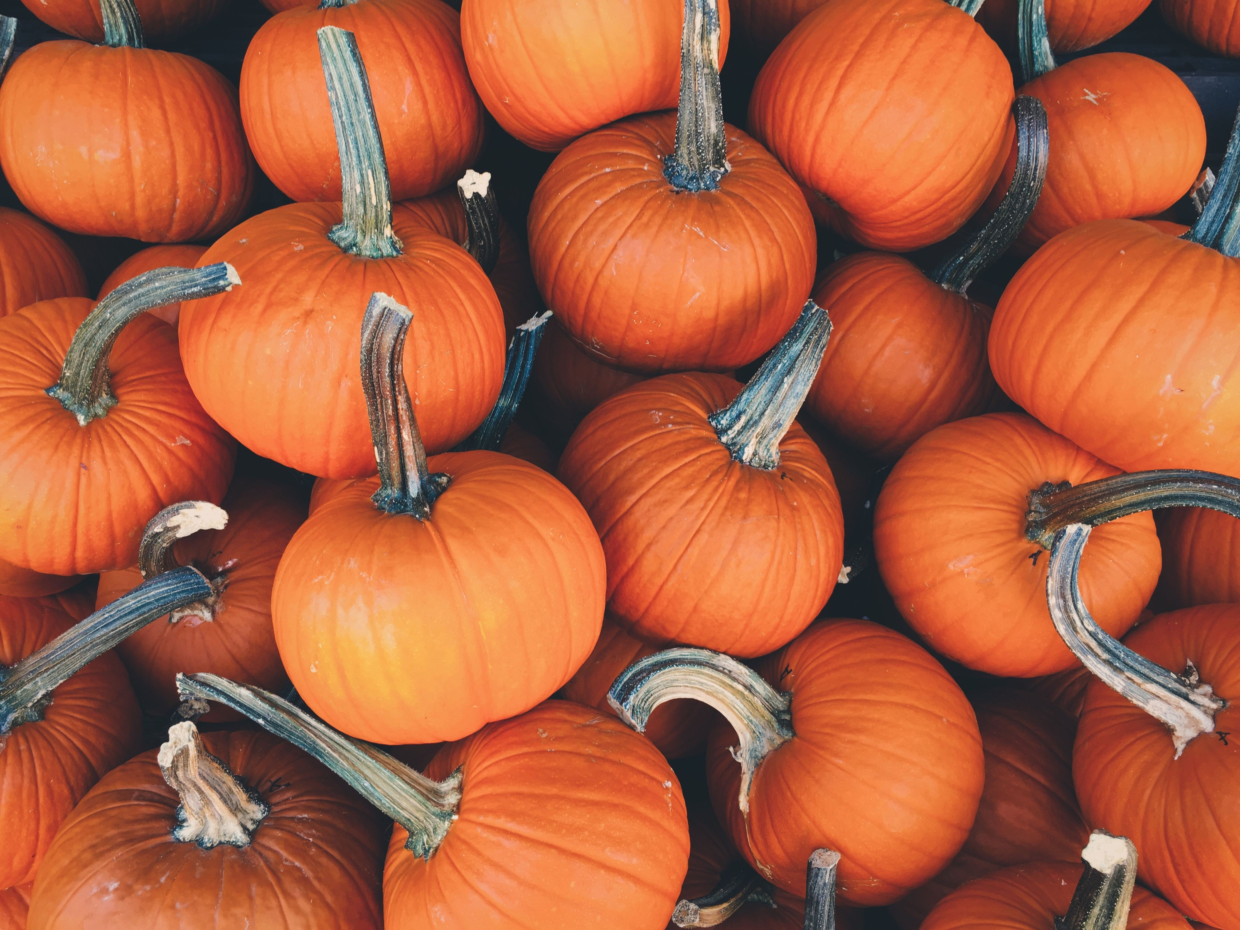Fall is Here! Check Out These Seasonal Events in New England-image