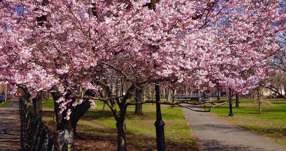 Best of New England: 2018's Top Spring Celebrations-image