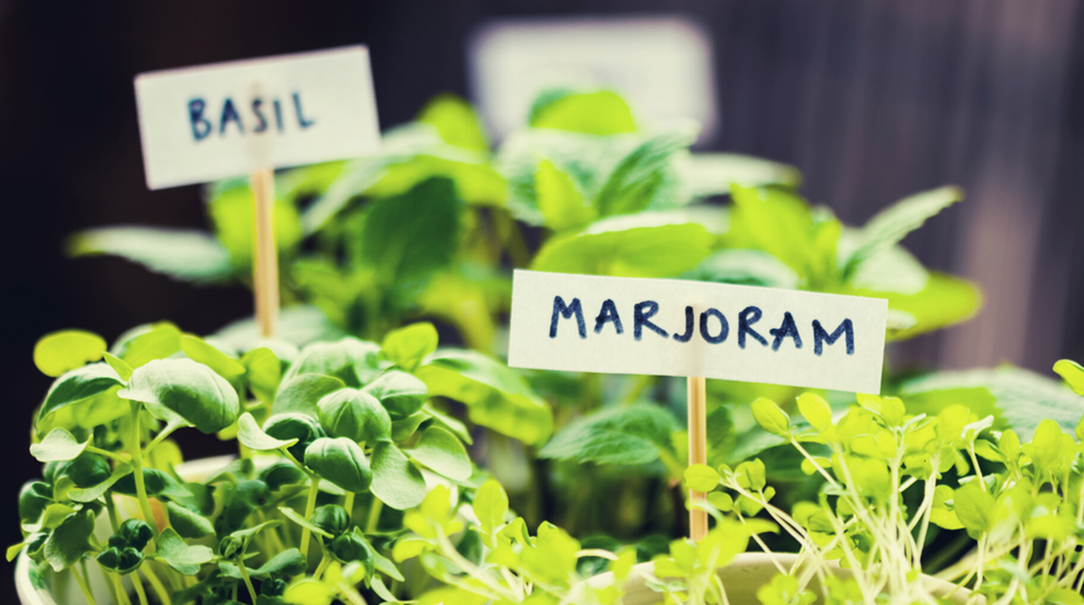 Growing Food/Herbs in an Apartment Home-image