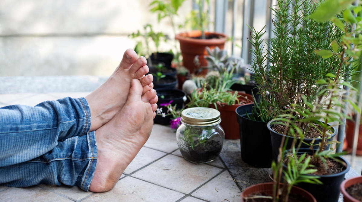 Growing Food/Herbs in your Apartment Home-image