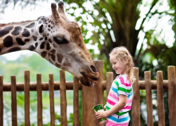 Get ready to explore creatures from all walks of life! At Albuquerque Zoo you can monkey around until your hearts content with a variety of close encounters featuring native and exotic animals. at ABQ Bio Park Zoo