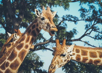Visit this 14-acre zoo, located within Cleveland Park, any day of the week! Explore the dozens of exhibits and learn about animals of all types! Whether planning an epic overnight stay or searching for clues for the secret safari – you are sure to have fun at Greenville Zoo! at Greenville Zoo