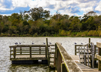 Explore the largest urban wilderness preserve in the United States that is home to more than 370 species of birds, mammals, reptiles and amphibians. Armand Bayou Nature Center offers 5 miles of well maintained walking trails, including a discovery loop boardwalk and bison viewing platform. at Armand Bayou Nature Center