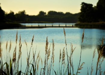 Located in the heart of the Bay Area, Clear Lake Park offers a variety of outdoor recreation for your inner explorer. Enjoy a full day mother nature with everything from kayaking and boating to fishing and birding. at Clear Lake Park