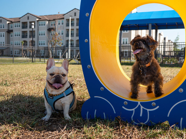 View of two dogs on dog park playground equipment at Murano at Three Oaks Pet Park.