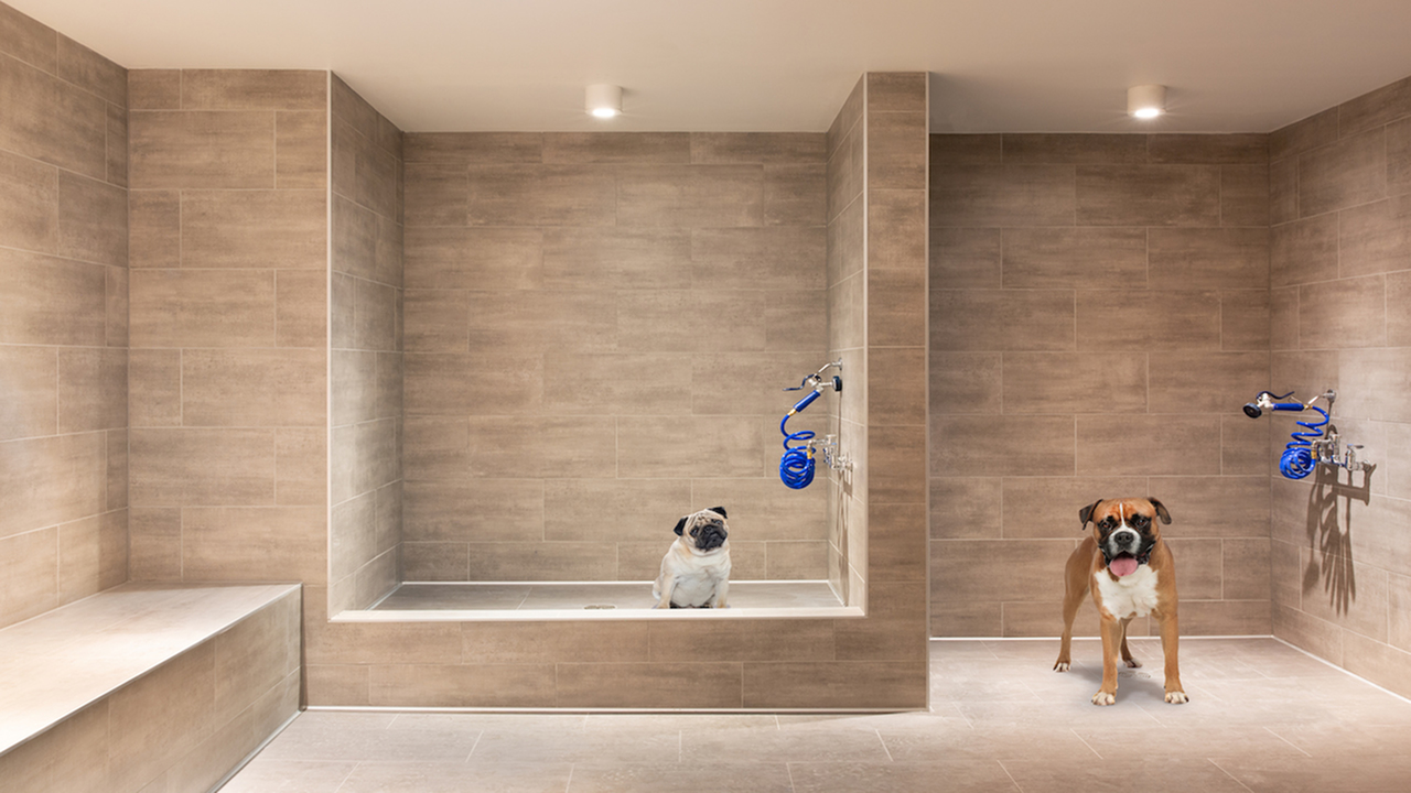 Pet spa with ample space to shake off
