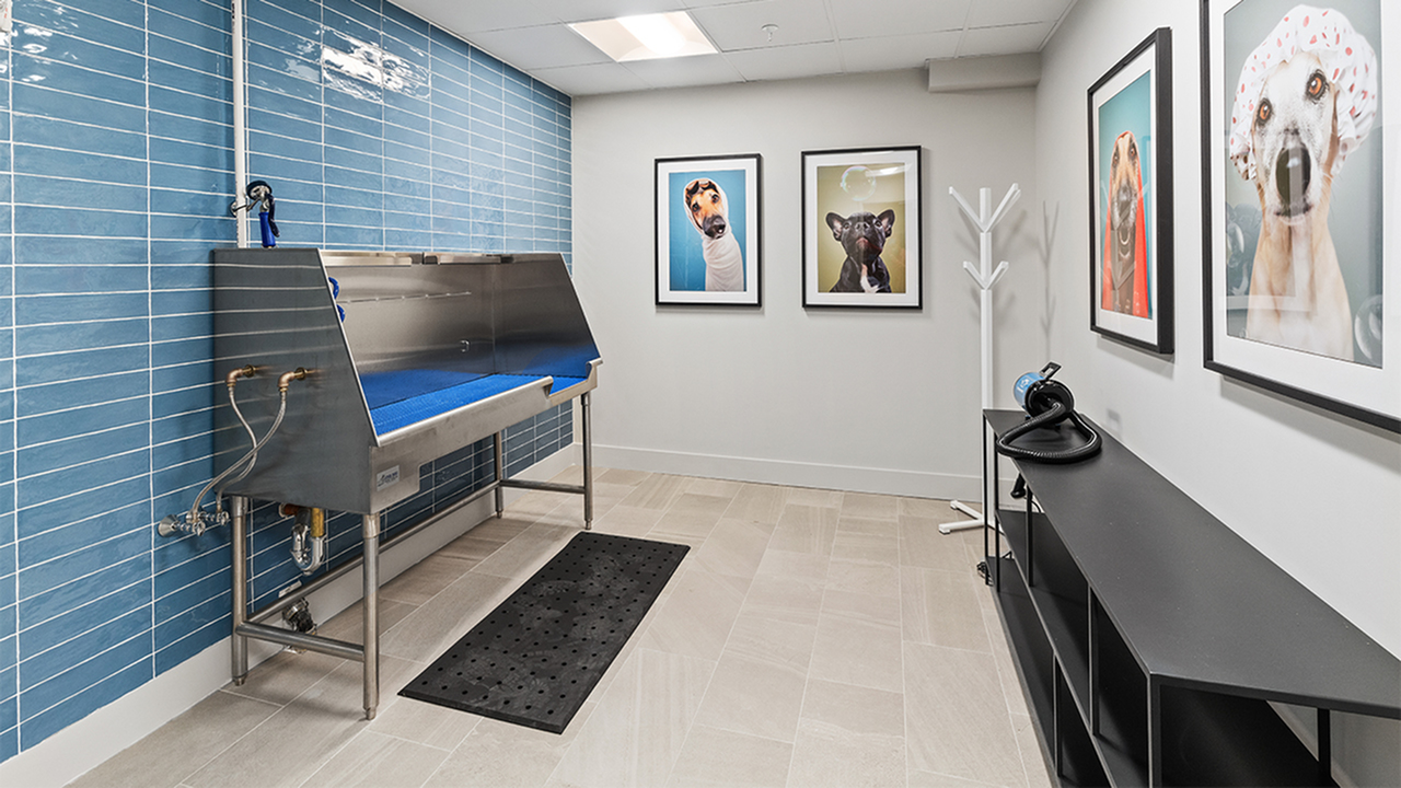 Luxe pet spa at Modera Framingham featuring fun pet photos and wash station