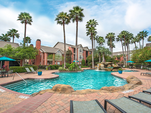 Large pool surrounded by tall palm trees