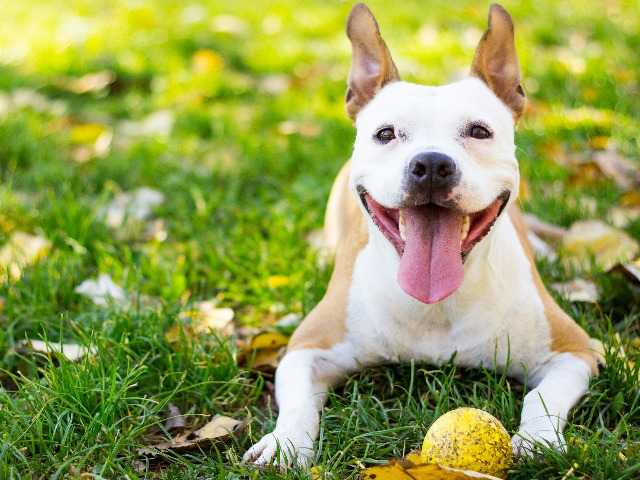 Image of dog on grass with ball