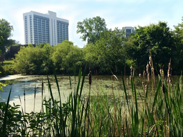 Image of Pond and pool views for Westwind Apts
