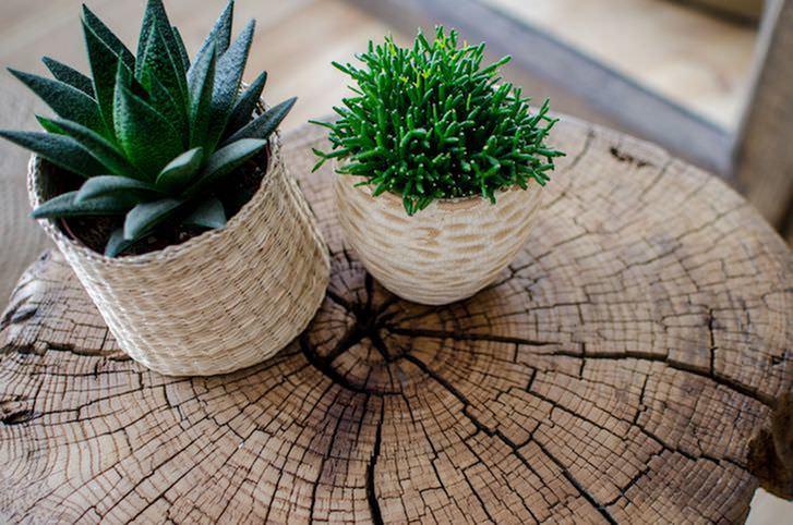low maintenance indoor plants on wooden table