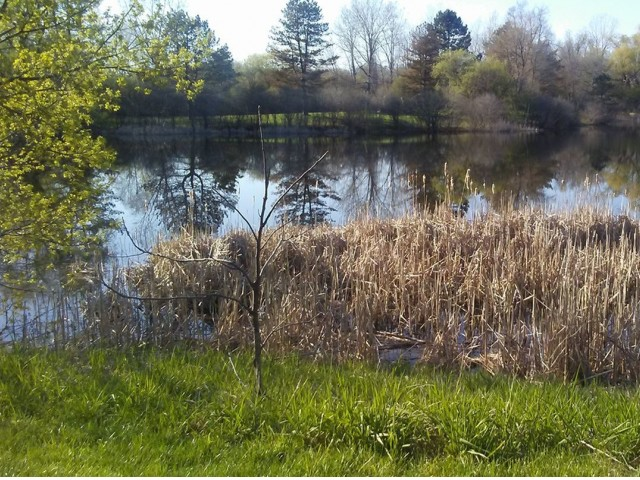 Image of Wildlife/Nature Pond for Village Manor Apartments