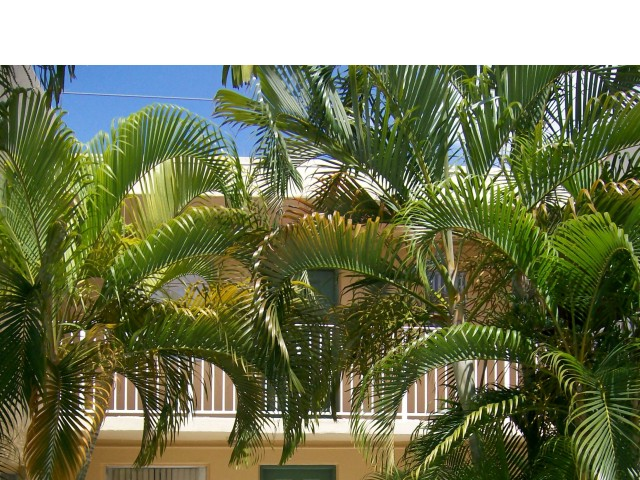 Image of Lush, Tropical Landscaping for Las Brisas Gardens Apartments