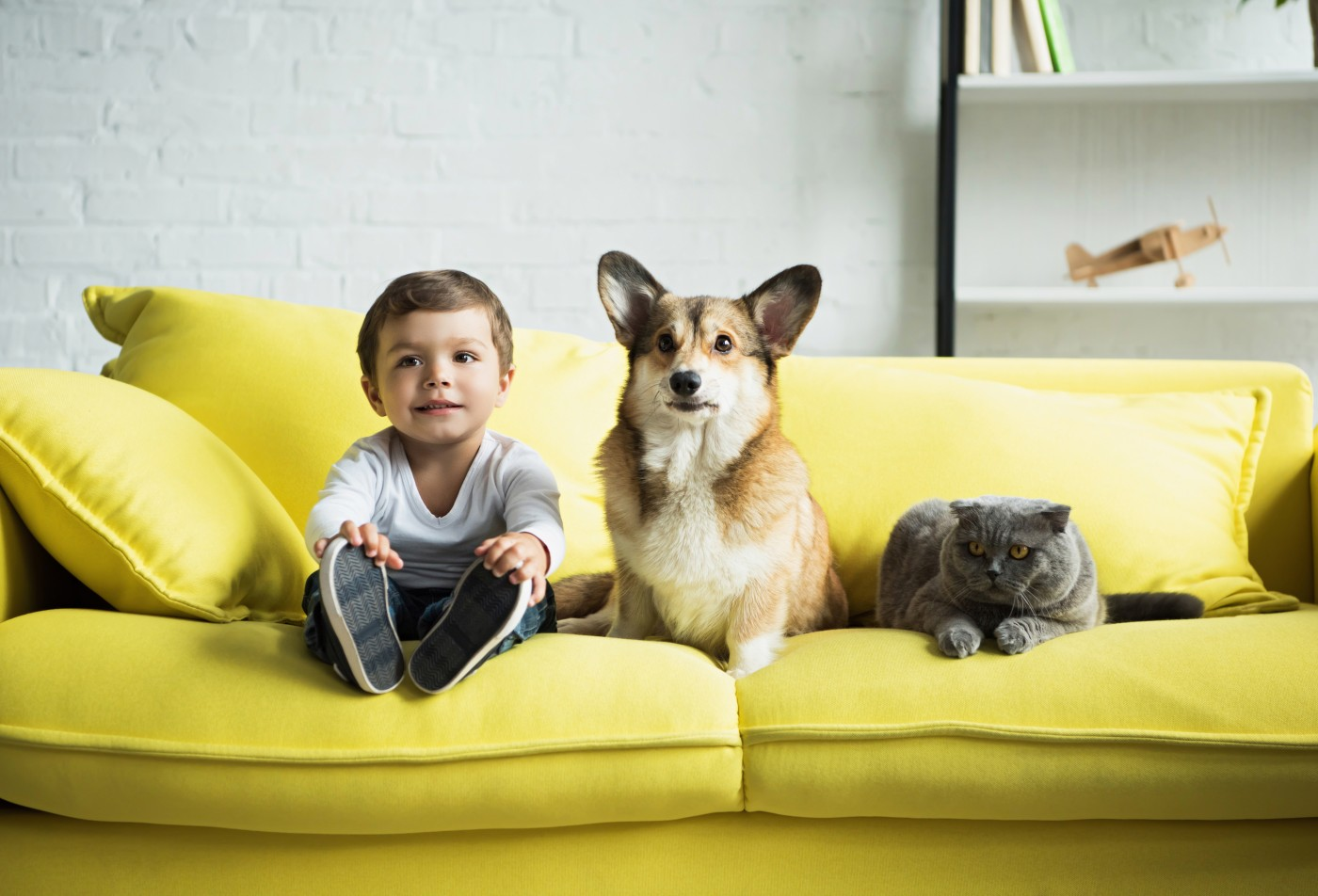 boy sitting on yellow sofa with dog and cat