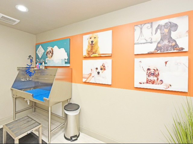 Pet Friendly with Dog Spa