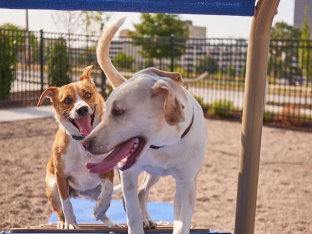 Image of Dog Park for VUE