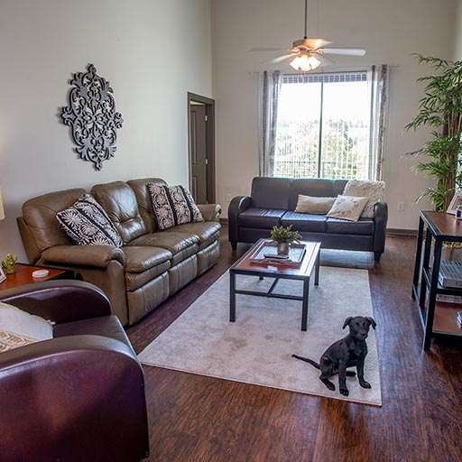 Image of Pet Friendly for Eclipse on Broad