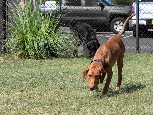 Resident Pet Park | Raiders Walk | Student Apartments Lubbock