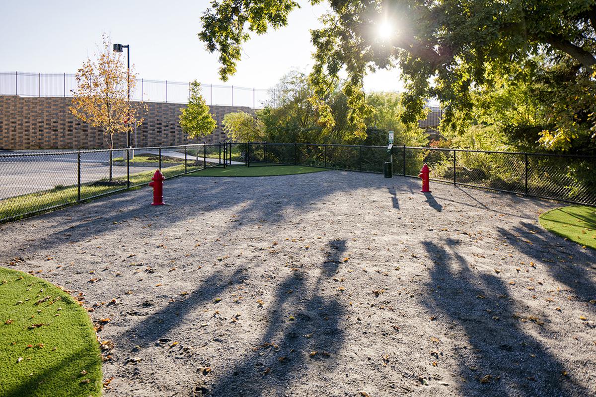 Dog Park Area `