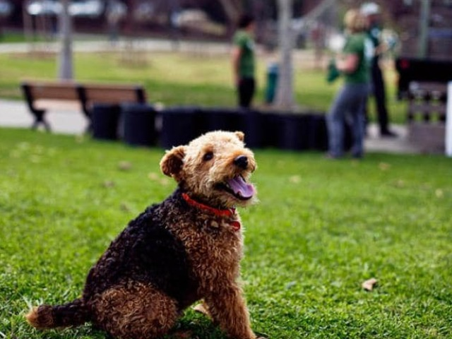Greenspace for Pets